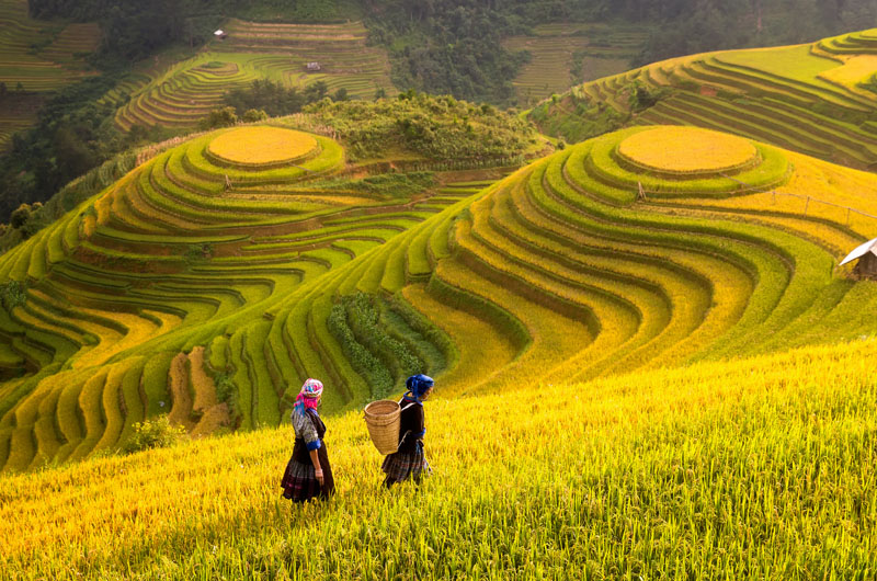 Sapa Travel Tips